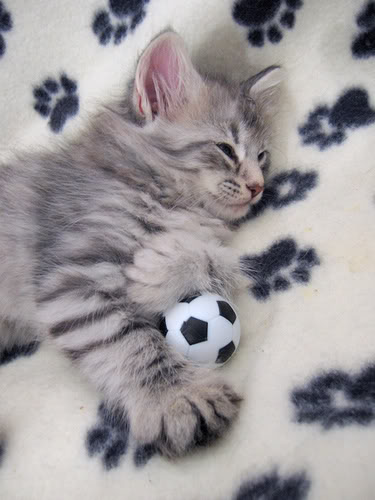 soccer_cat5